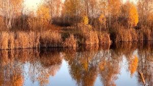 Осень на озере Мартышев Осокорки